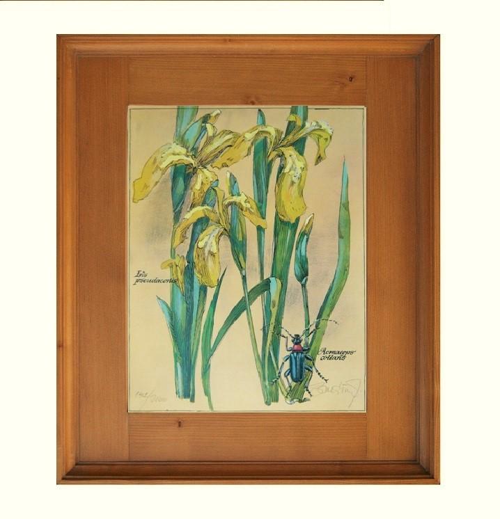 Květiny obrázek Svět pokladů